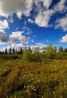 Free Field Of Flowers Stock Photo - 9983180