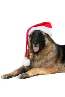 Large Dog With Tongue Out And Santa Hat Royalty Free Stock Photo