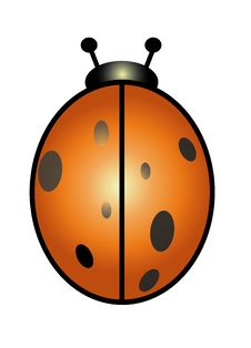 Free Ladybird Stock Photography - 9984442