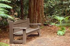 Free Secluded Bench Royalty Free Stock Photo - 9985985