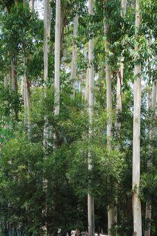 Free Trees Stock Photos - 9987063