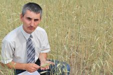 Man Inspecting The Wheat Stock Photography