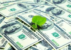 Free Young Plant And Dollars Stock Images - 9989124