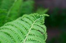 Free Ferns Royalty Free Stock Images - 9989399