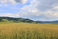 Free Wheat Field Royalty Free Stock Photography - 9989487
