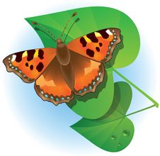 Free Butterfly And Green Leaves. Stock Photos - 9989843