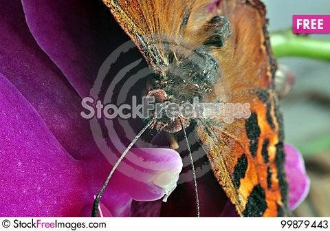 Free Butterfly Closeup Stock Photos - 99879443