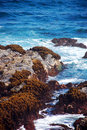 Free Oregon Coastline Royalty Free Stock Image - 9990636