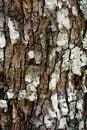 Free Tree Bark Texture Stock Photography - 9990682