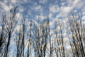 Free Look Of Bare Trees Royalty Free Stock Photography - 9993827