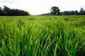 Free Morning Landscape With Dew On Grass Stock Photo - 9994580