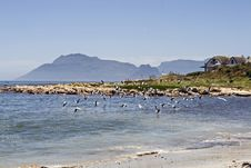 Free Kommetjie Near Cape Town Stock Images - 9990314
