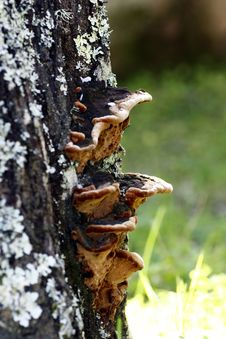 Free Tree Bark Texture With Fungus Royalty Free Stock Photo - 9990585