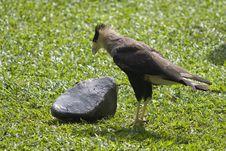 Free Bird And A Stone Stock Photo - 9990610