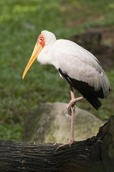 Free Stork On A Trunk Royalty Free Stock Image - 9990616