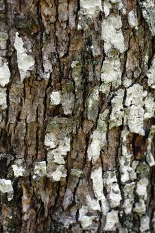 Free Tree Bark Texture Stock Photography - 9990682