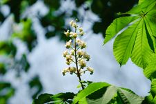 Free Trees Floweres Stock Photography - 9991222