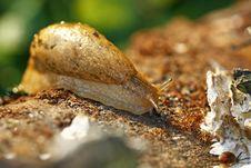 Free Slug On The Log Royalty Free Stock Images - 9991229