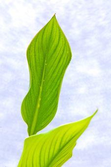 Free Leaf Stock Image - 9991311
