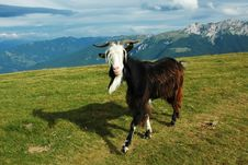 Free Goat In Mountains Stock Image - 9991661