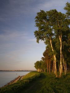 Free Birches On The Coast Of Baltic Sea Royalty Free Stock Photo - 9992865