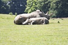 Free Asian Rhino Stock Images - 9993354