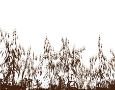 Field Under Of Grass And Cereals Royalty Free Stock Photography