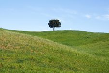 Free Lonely Tree Royalty Free Stock Photography - 9994867