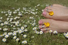 Free Womans Feet In Sunny Meadow Royalty Free Stock Images - 9995359