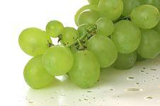 Free Green Vine Royalty Free Stock Photo - 9996725