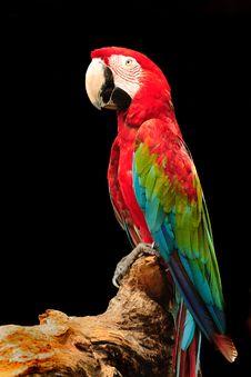 Macaw Royalty Free Stock Photos
