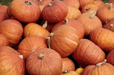 Free Pumpkins Stock Images - 9997054