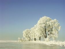 Free Winter Scenery, Frost Covered The Trees Royalty Free Stock Photography - 9997657