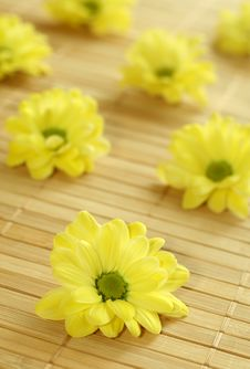 Yellow Spring Flowers On Bamboo Background. Royalty Free Stock Photos