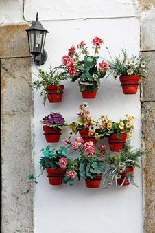 Free Several Flower Pots Stock Image - 9998011