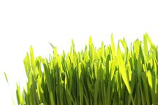 Free Green Grass Royalty Free Stock Images - 9998749