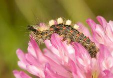 Free Caterpillar On Pink Flower Stock Image - 9999731