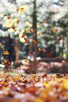 Free Leaves Falling Autumn Fall Season Royalty Free Stock Image - 99939996
